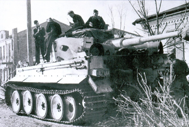 24 tiger