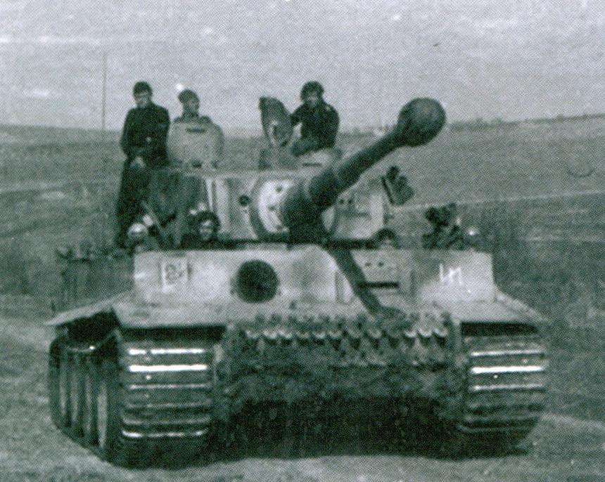 25 tiger